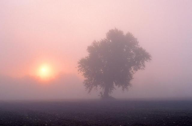 early-morning-mist-larry-landolfi